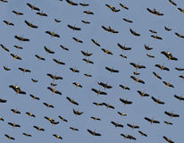 Storks Emigration. Emigration of stork pack. They are emigrating from north to south Stock Photos