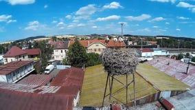 Storks family stock video