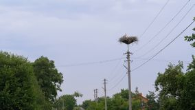 Storks Family are Sitting in the Nest on Pillar of High Voltage Power Lines on Sky Background. Storks Family are Sitting in the Nest on a Pillar of High Voltage stock footage