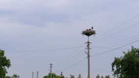 Storks Family are Sitting in the Nest on Pillar of High Voltage Power Lines on Sky Background. Storks Family are Sitting in the Nest on a Pillar of High Voltage stock video footage