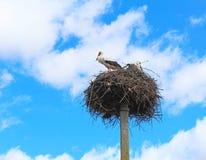 Storks flew Stock Photos