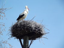 Storks flew Stock Photography