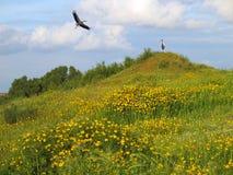 Storks have arrived. Nature Preserve Nahal Besor, Israel Stock Photo