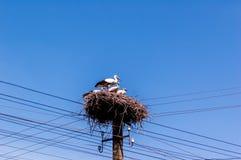 Storks i bygga bo Royaltyfri Foto