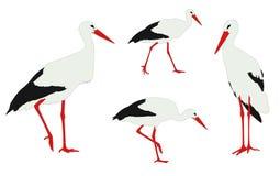 Storks illustration. Storks walkin and standing - illustration Stock Photos