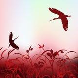 Storks in love Stock Photos