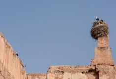 Storks in Marrakesh Stock Image