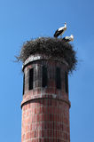 Storks in nest Royalty Free Stock Image