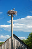 Storks in nest Stock Photo