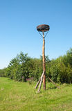 Storks nest Royalty Free Stock Photography
