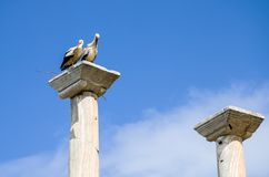 Storks in the nest. On a column ruins Stock Image