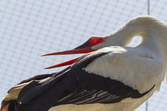Storks in the nest Stock Photos
