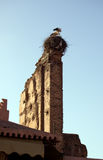 Storks in the nest. Over an old wall in Marrakesh Stock Images