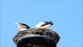 Storks on nest against blue sky stock footage