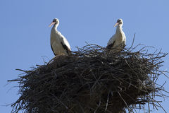 Storks in the nest. Storks in the nest against the sky Royalty Free Stock Image