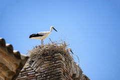 Storks on the nest in Aragon Stock Image