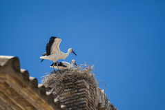 Storks on the nest in Aragon Royalty Free Stock Image