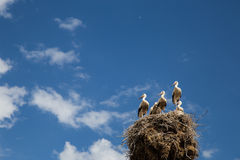 Storks Nest Blue sky Royalty Free Stock Images