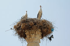 Storks in Nest - Capitoline Temple, Volubilis, Morocco Royalty Free Stock Photography