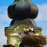 Storks In The Nest And Church Tower