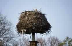 Storks nest Stock Photos