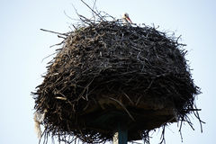 Storks nest Royalty Free Stock Photos
