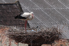 Storks in nest in front of roofs Stock Photography