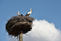 Storks in the nest Royalty Free Stock Photography