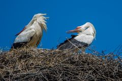 Storks on the nest looking back Royalty Free Stock Images