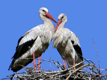 Storks. Nest near a rural yard near Poltava, Ukraine Stock Image
