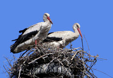 Storks. Nest near a rural yard near Poltava, Ukraine Royalty Free Stock Images