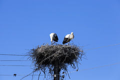 Storks in the nest. Photographed close-up of storks sit in the nest, blue sky Stock Photography