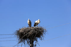 Storks in the nest. Photographed close-up of storks sit in the nest, blue sky Stock Image