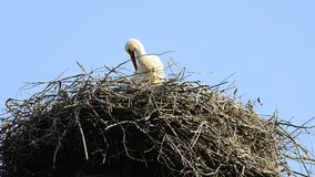 Storks in a nest stock footage
