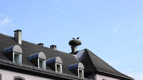 Storks in a nest on a roof in the village of Selz. Storks with offspring in a nest on a roof in the village of Selz, Alsace, France stock video footage