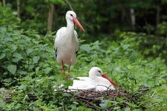 Storks on a nest Royalty Free Stock Photos