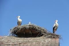 Storks nest Royalty Free Stock Image