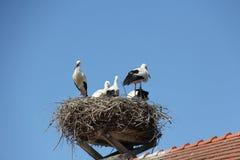 Storks nest Stock Photo