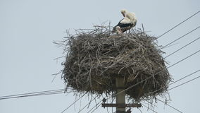 Storks in a Nest on Street. Storks nest on a street pillar stock video footage