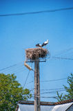 Storks on the nest Royalty Free Stock Image