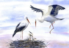 Storks in the nest. Watercolor hand drawn illustration Stock Photos