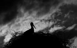 Storks nesting Stock Images