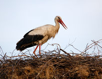 Storks nesting Royalty Free Stock Images