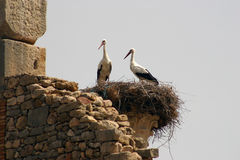 Storks nesting on a Column of Volubilis Stock Images