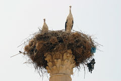 Storks nesting on a Column of Volubilis 2 Royalty Free Stock Image