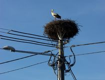 Storks nests on power pole. In the background is blue sky. Below the nest there is street lighting Stock Photos