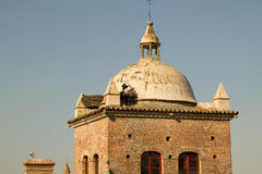 Storks in the old quarter of Cáceres Royalty Free Stock Images