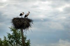 Storks rede på överkanten av pollaren Arkivbilder