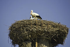 Storks at roof of church-detail Stock Photo