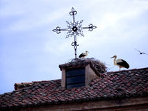 Storks on the roof of a rustic house Royalty Free Stock Images